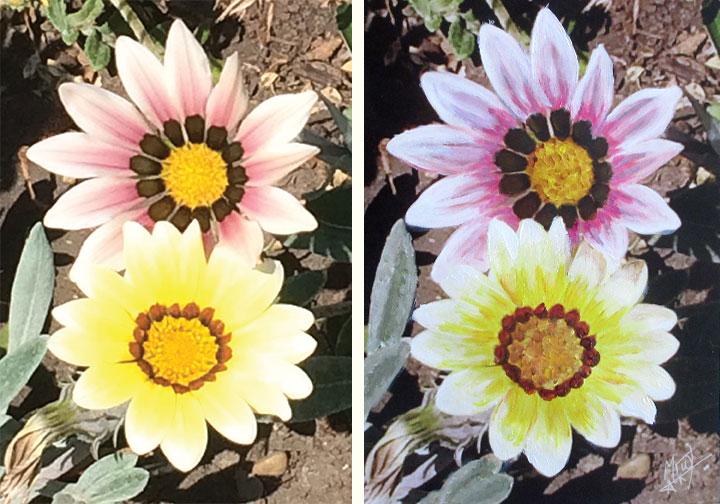 Garden Flowers Comparison